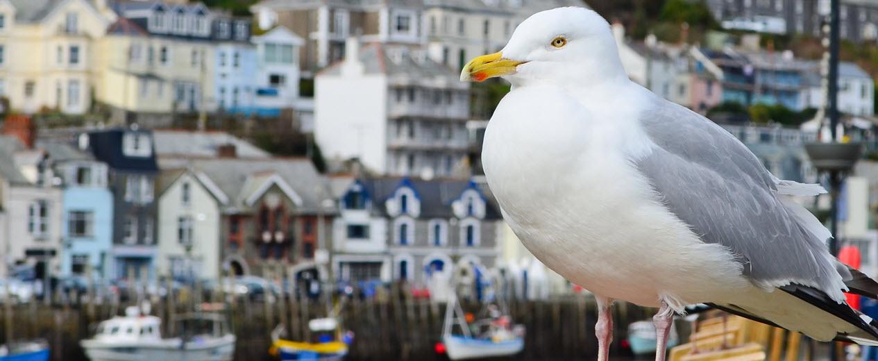 Seagull Hero