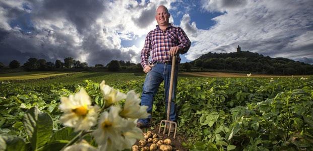Comber Potatoes, Northern Ireland