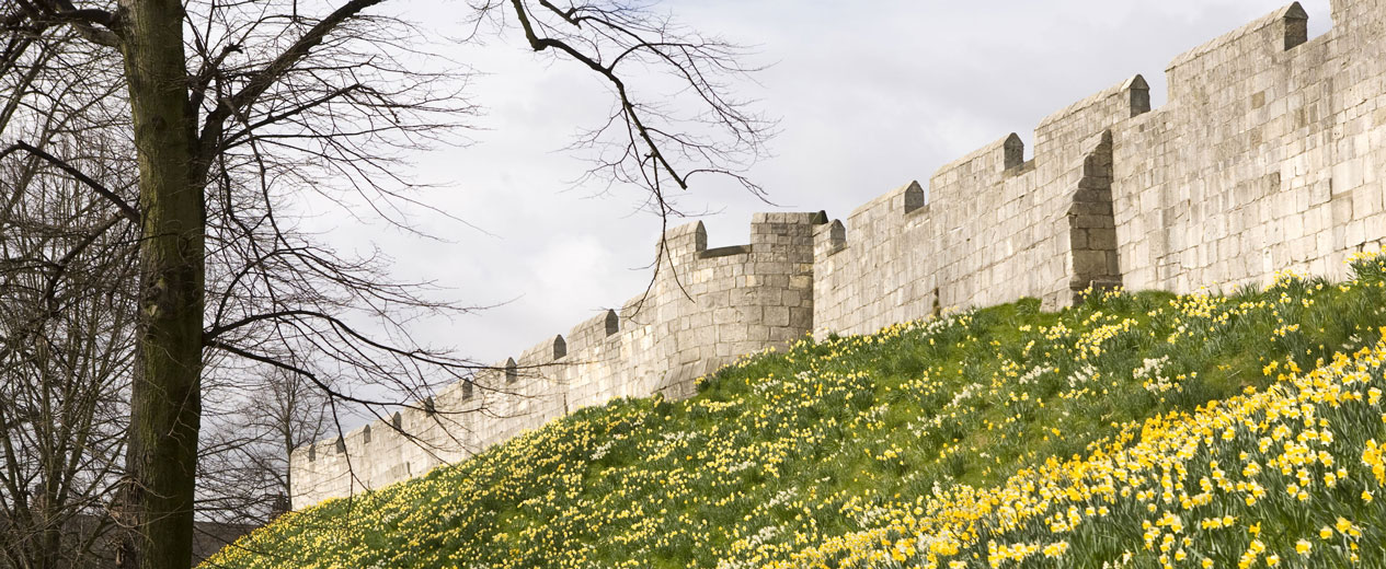 York city walls, in Northern England, on a spring day with yellow daffodils,