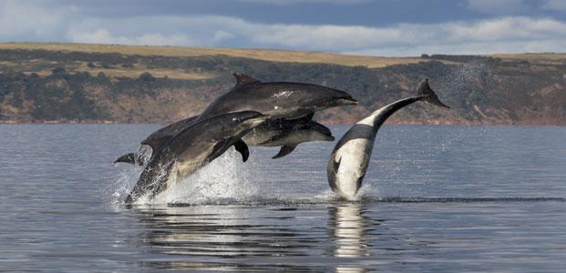 Dolphin Spirit