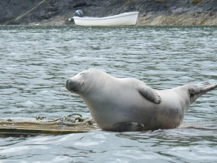 seal-tastic