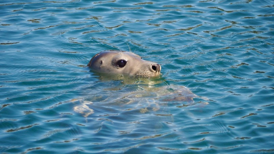 Seal-P6020015