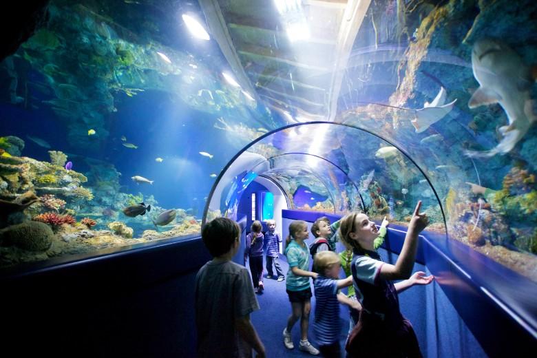 Bristol-Aquarium-tunnel_CREDIT_Bristol-Aquarium