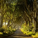 dark hedges northern ireland uk shutterstock 481335406 1024x683